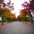 [風景写真]代々木公園