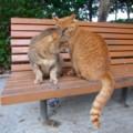 [猫]神奈川県某所の猫スポットにて