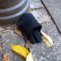 [落とし物]手袋(両手)