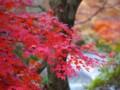 [風景写真]紅葉