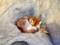 井の頭自然文化園のキツネ