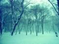 [風景写真]加工した雪景色