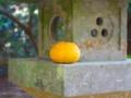 [落とし物]柚子