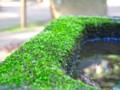 [植物]苔