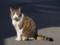 パトロール中の猫