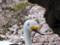 白鳥型の足漕ぎボートと桜