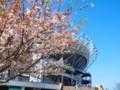 [風景写真]カシマスタジアムと桜