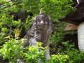 [風景写真]北野天満宮の狛犬