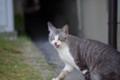 [猫]沖島の猫