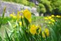 [風景写真]近江八幡の八幡堀