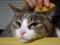 義理のうちの猫