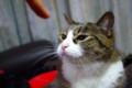 [猫]義理のうちの猫