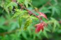 [風景写真][植物]葉っぱと雫