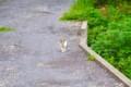 [猫]逃げる猫