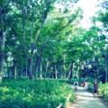 [風景写真]井の頭公園