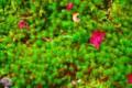 [植物]草と落ち葉