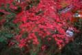 [風景写真][植物]石山寺の紅葉