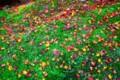 [風景写真][植物]石山寺の紅葉(落ち葉)