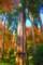 石山寺の大木