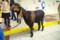 天王寺動物園のミミナガヤギ