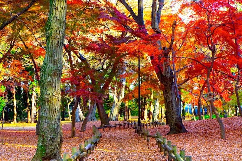 樹のある風景
