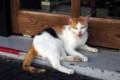 [猫]石垣島の猫