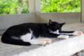 [猫]竹富島の猫