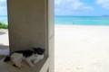 [風景写真][猫]竹富島の猫