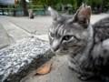 [猫]公園を散歩していた地域猫