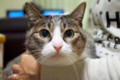 [猫]義理の実家の猫