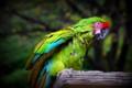 [動物]千葉市動物公園のヒワコンゴウインコ