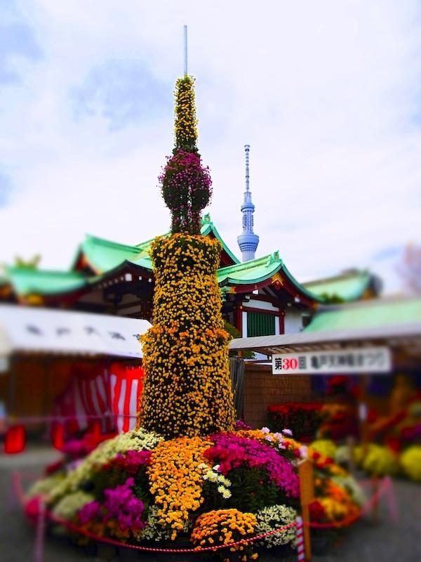 亀戸天神菊まつりと東京スカイツリー