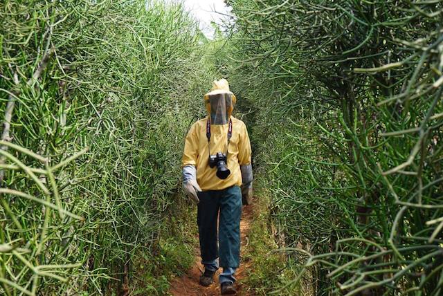 2015年9月 ブルンジの事業地で養蜂を見学する筆者