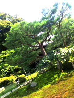 f:id:yukinohime:20080705151509j:image