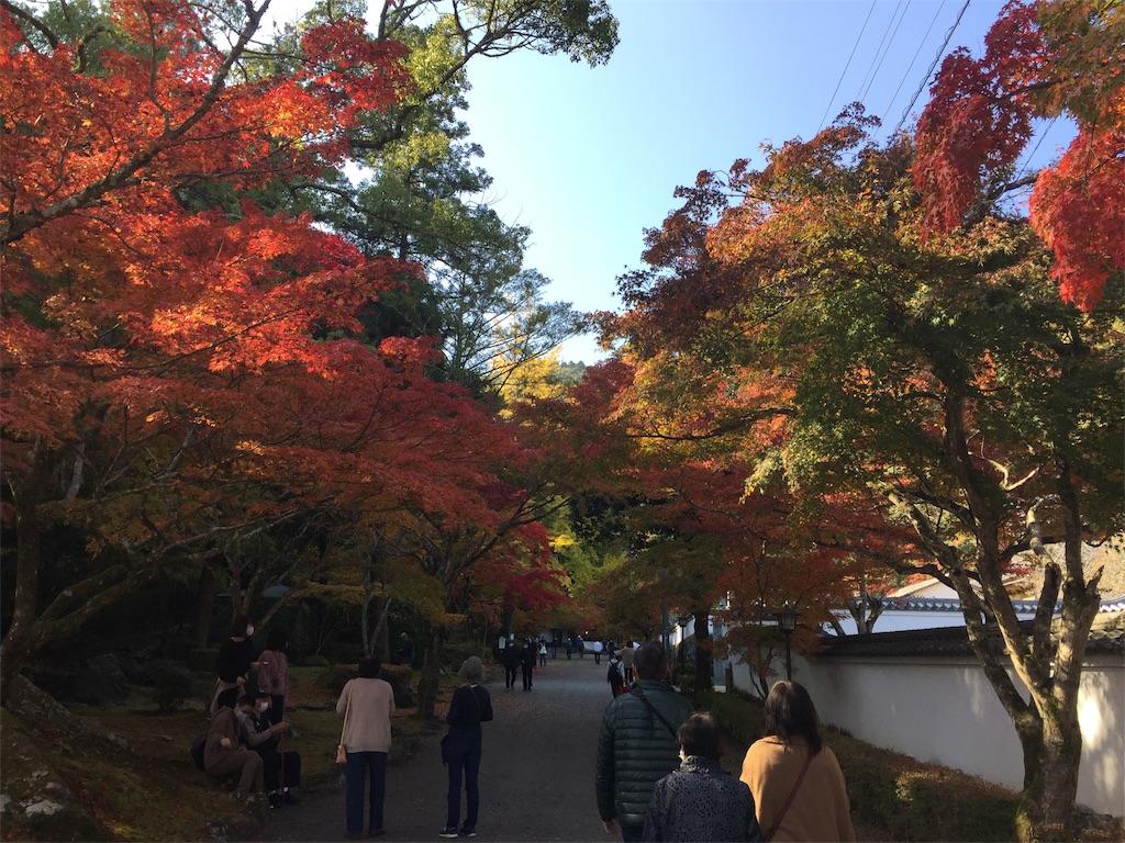 f:id:yukinosita-tamasudare:20201114164649j:image