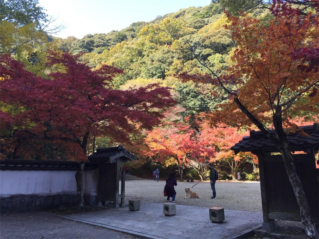 f:id:yukinosita-tamasudare:20201114180349j:image