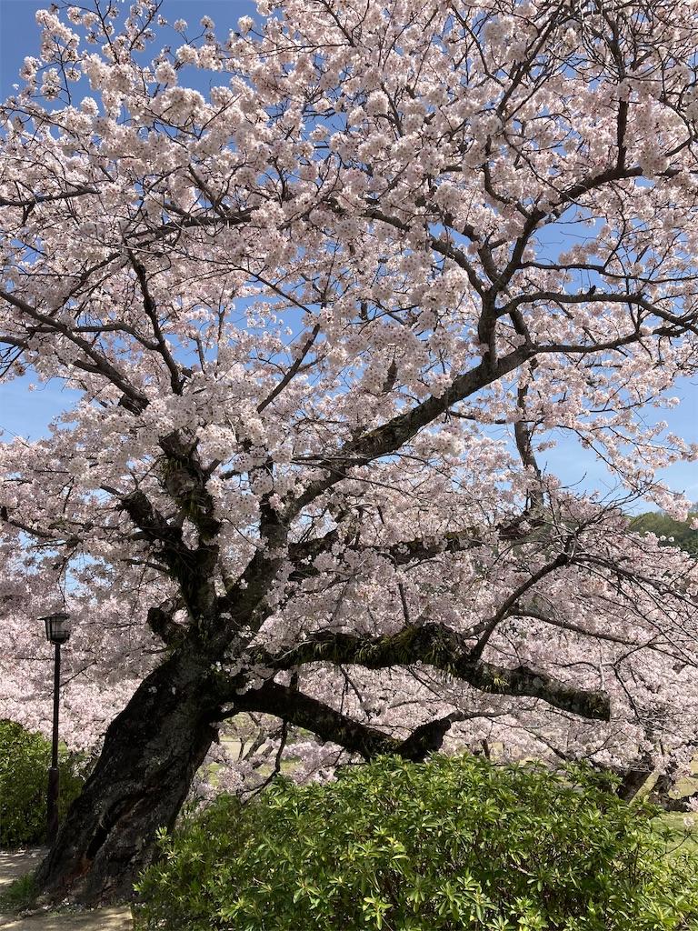 f:id:yukinosita-tamasudare:20210331130243j:plain