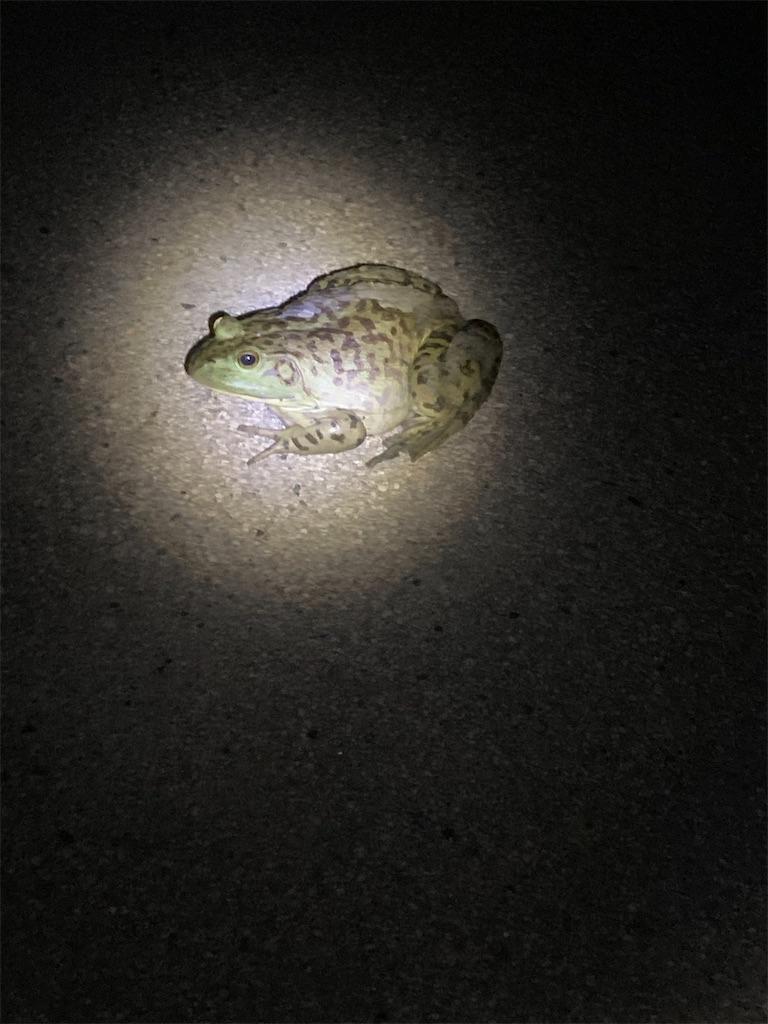 f:id:yukinosita-tamasudare:20210625220107j:image