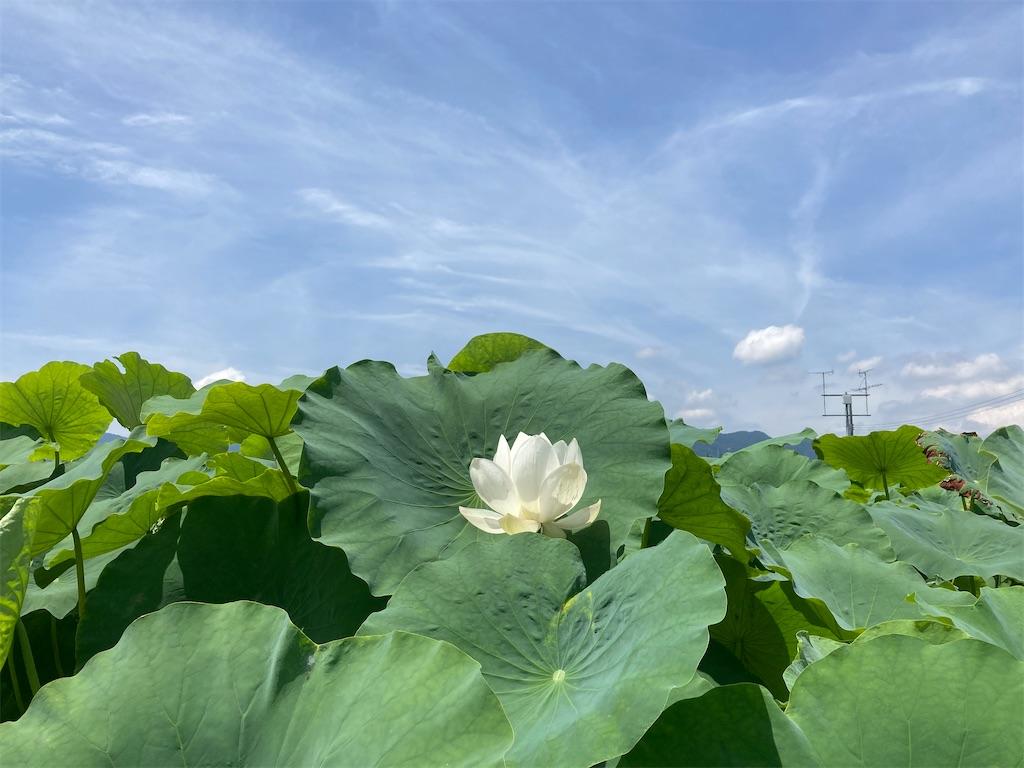 f:id:yukinosita-tamasudare:20210724165017j:image
