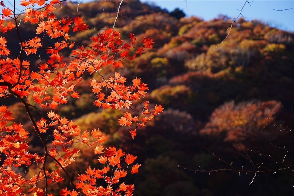 f:id:yukionoda:20190323164222j:image