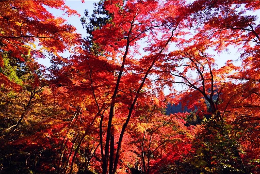 f:id:yukionoda:20190413140303j:image