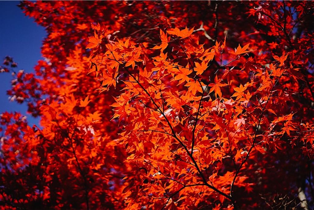 f:id:yukionoda:20190413140314j:image