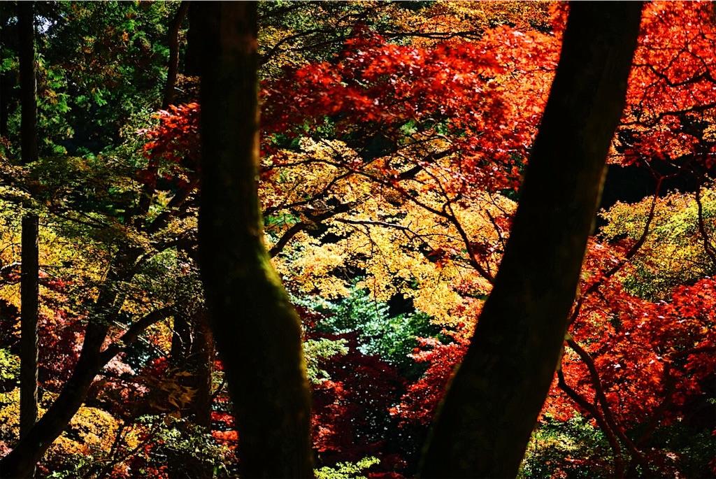 f:id:yukionoda:20190413140338j:image