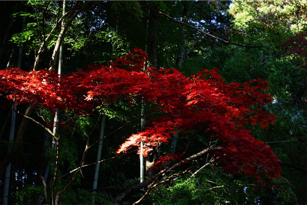 f:id:yukionoda:20190413140422j:image