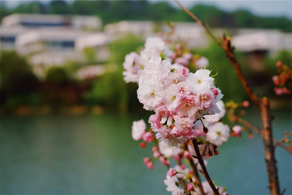 f:id:yukionoda:20190419175725j:image