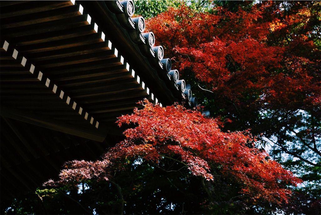 f:id:yukionoda:20190615010411j:image