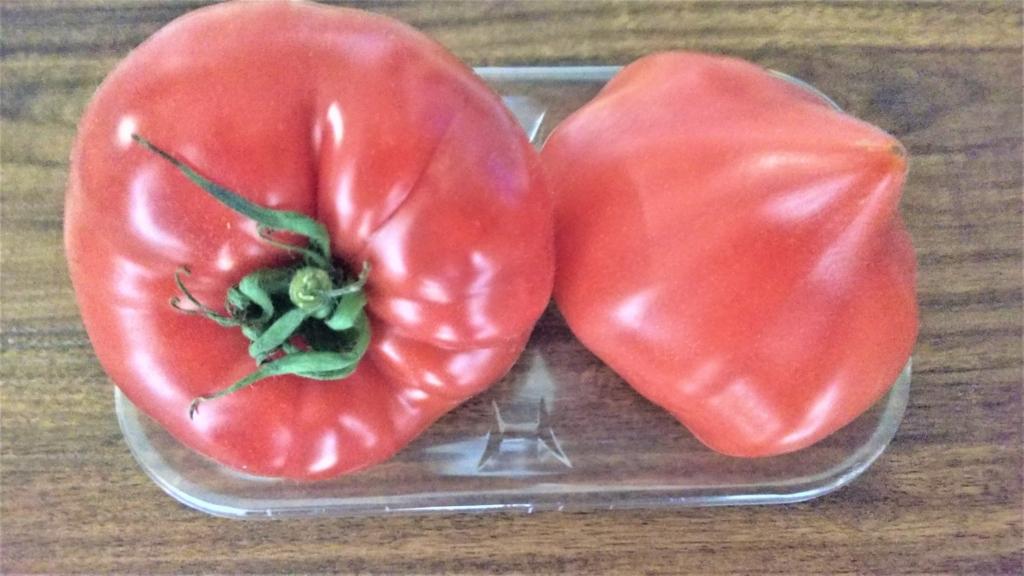 愛知県産ファーストトマトの画像