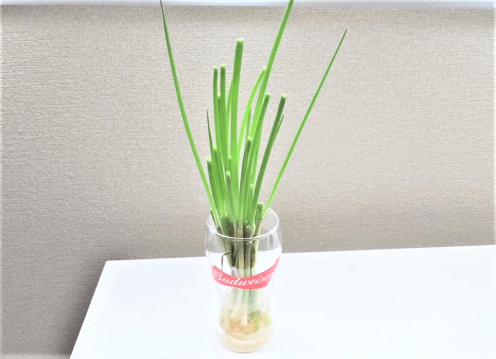 小ネギ再生栽培2回目の5日目の画像