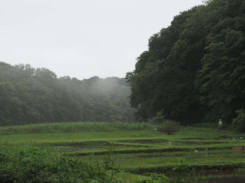 f:id:yukisigekuni:20200615215822j:plain