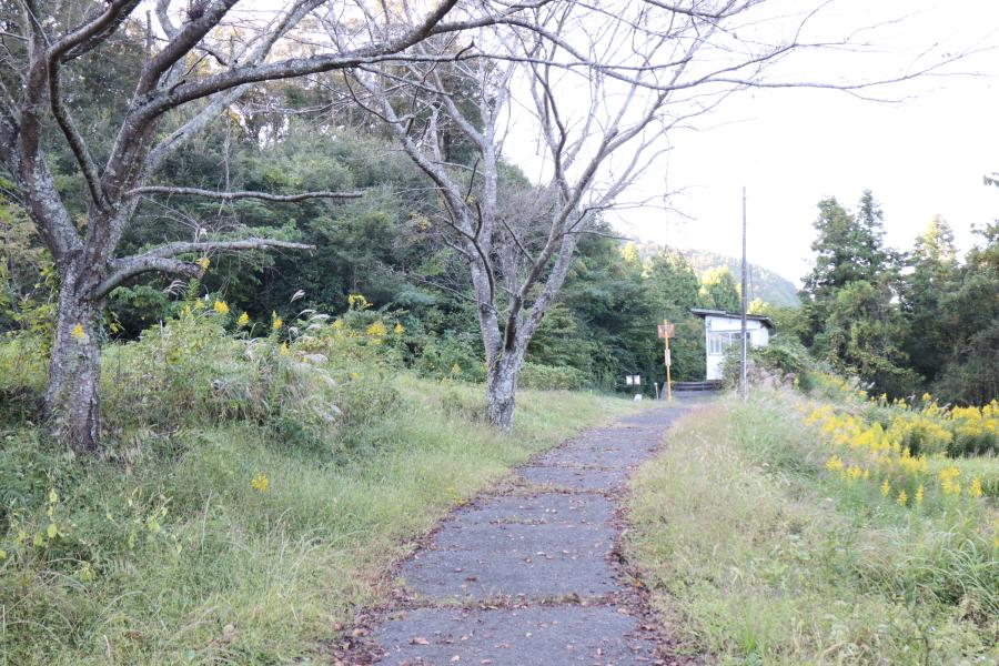 f:id:yukisigekuni:20201112221041j:plain